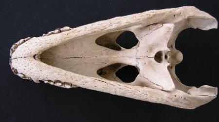 fosiljpeg