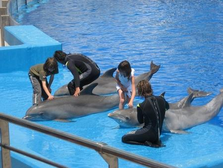 nadando con los delfinesjpg