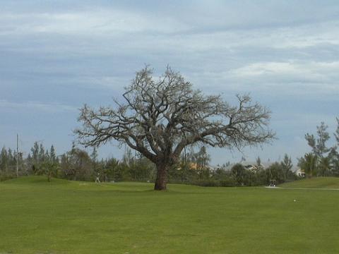 golf-bahamas.jpg