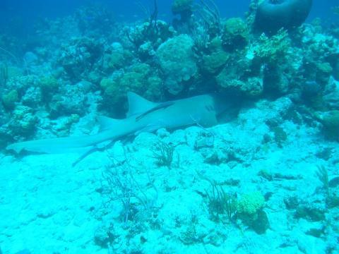buceo-bahamas.jpg