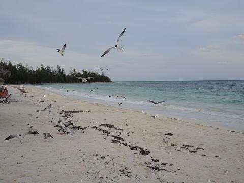 costa-bahamas.JPG